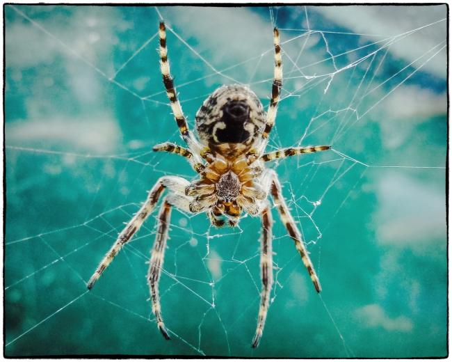 spiderscarborough-1