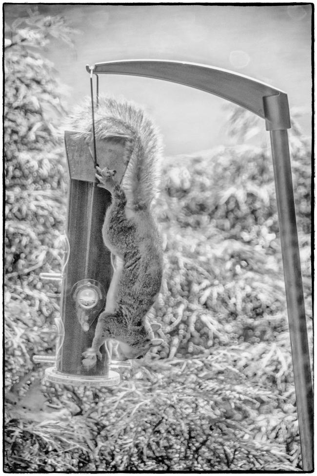 squirrelonfeeder-1
