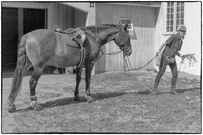 stonecrophorse&rider-1