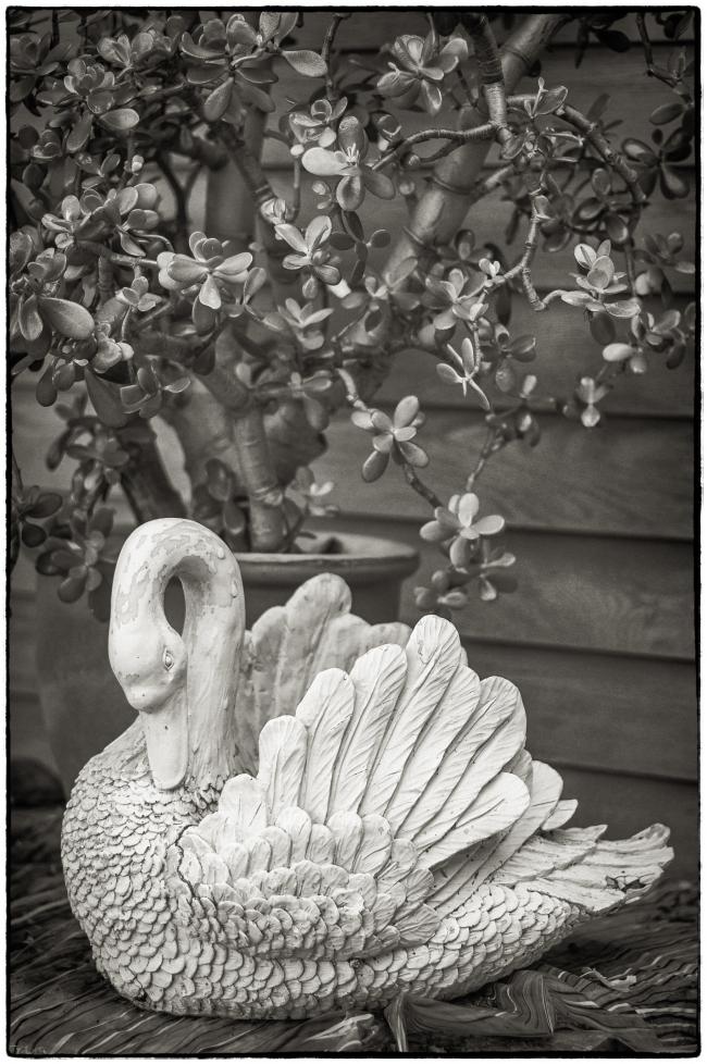 swan&jade-1