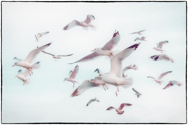 thebirds-2