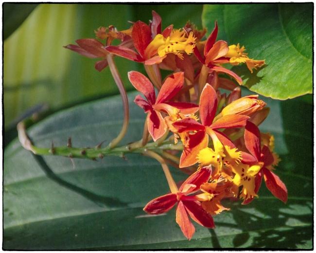 orchidshow3-1