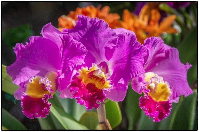 orchidshow3-2