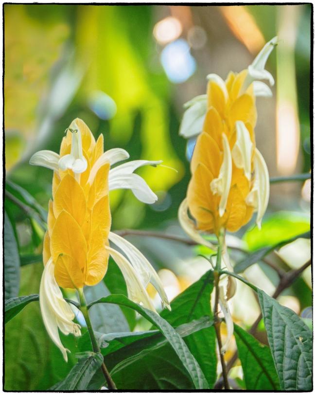 orchidshow3-5