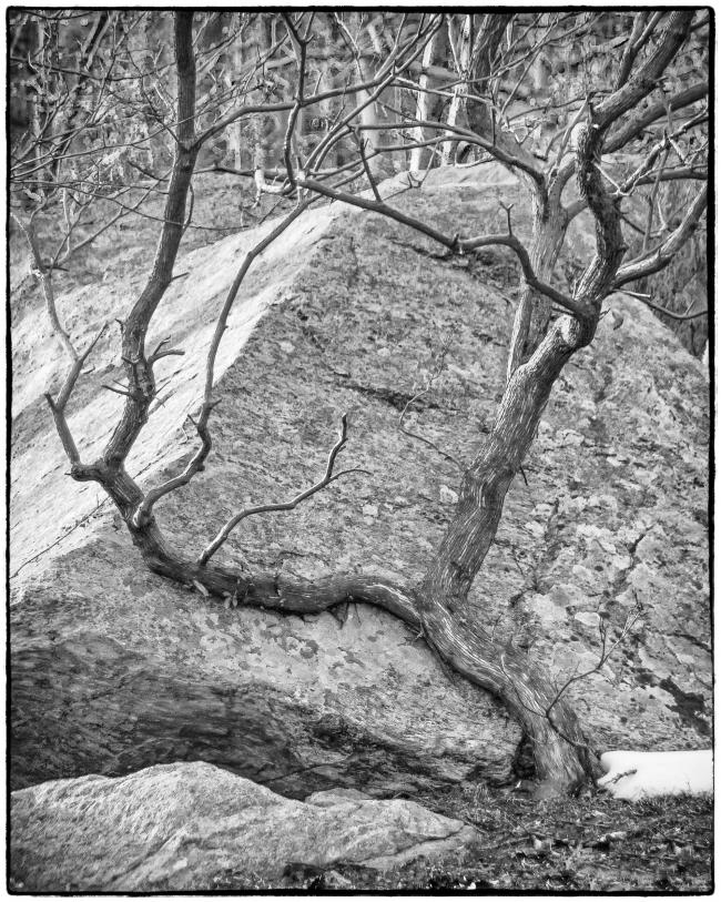 treeandrock-1
