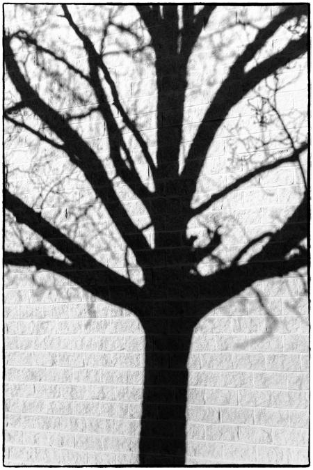 treeshadows-6