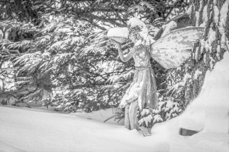 fairy_131217_016-edit-edit