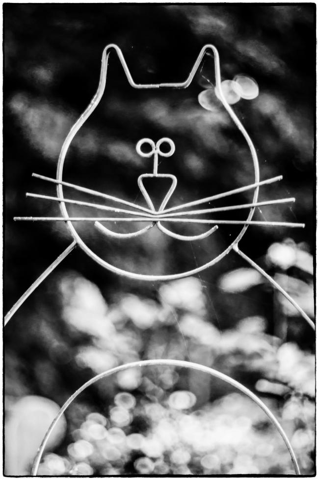 wirecat-1