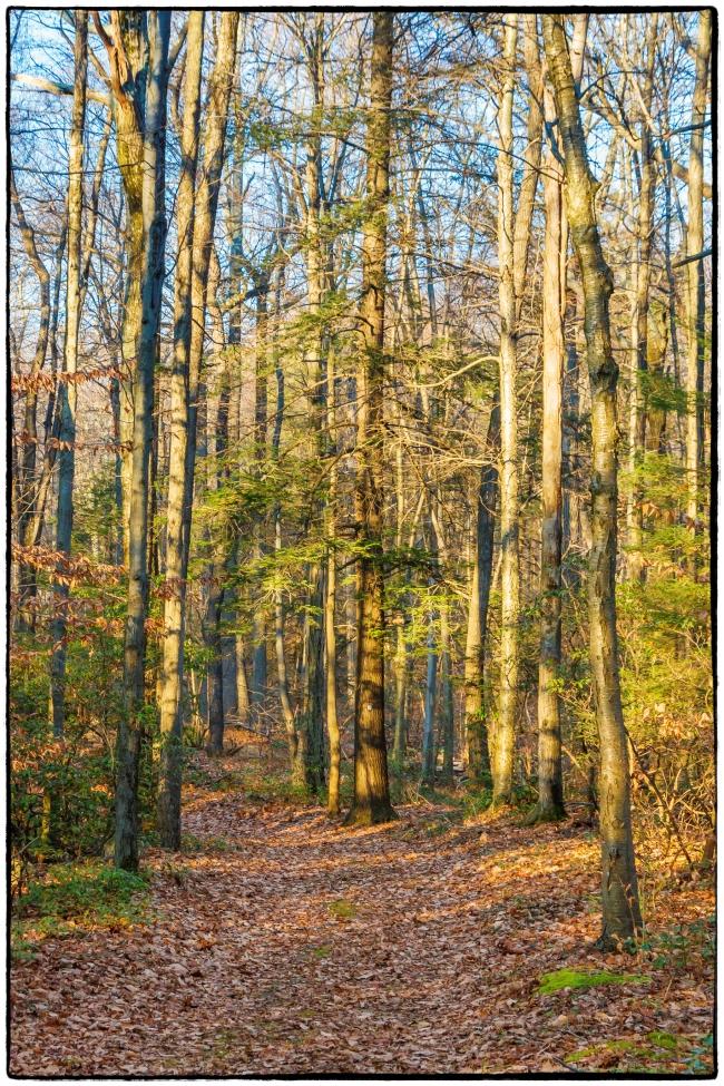 woodlandscenes-1